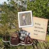 Birding Plett